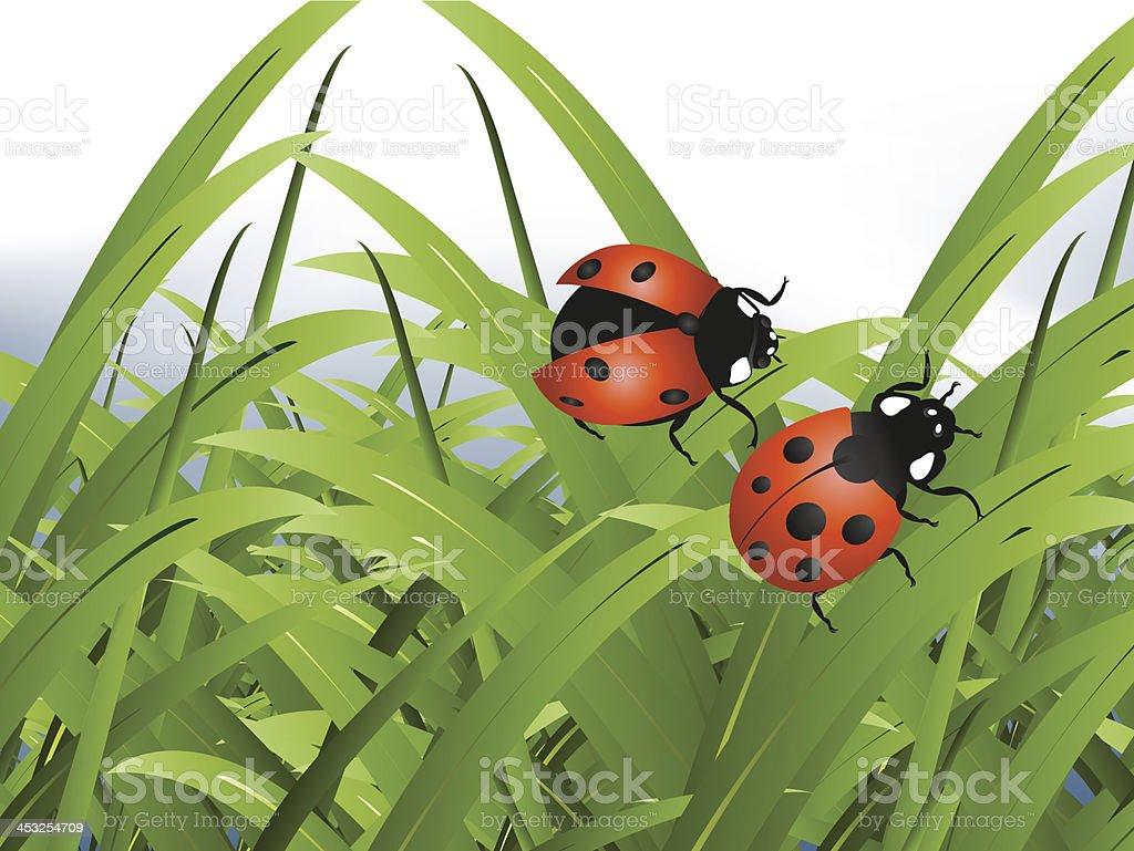 Bright red Lady Bug