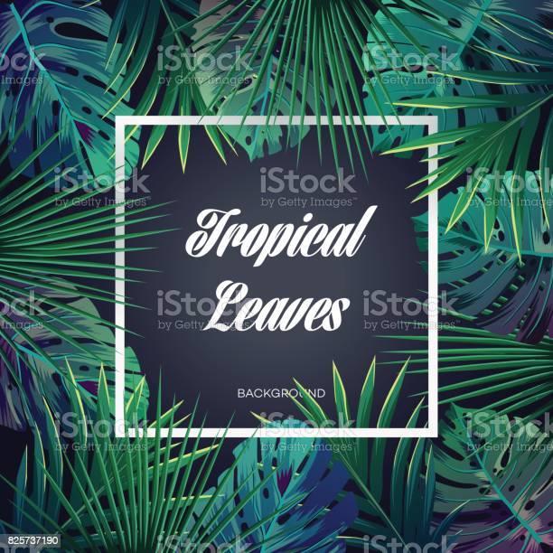 Bright tropical background with jungle plants exotic pattern with vector id825737190?b=1&k=6&m=825737190&s=612x612&h=ewdocaue7etjy32htuwdtd57nvdz potav0gdhod2wu=