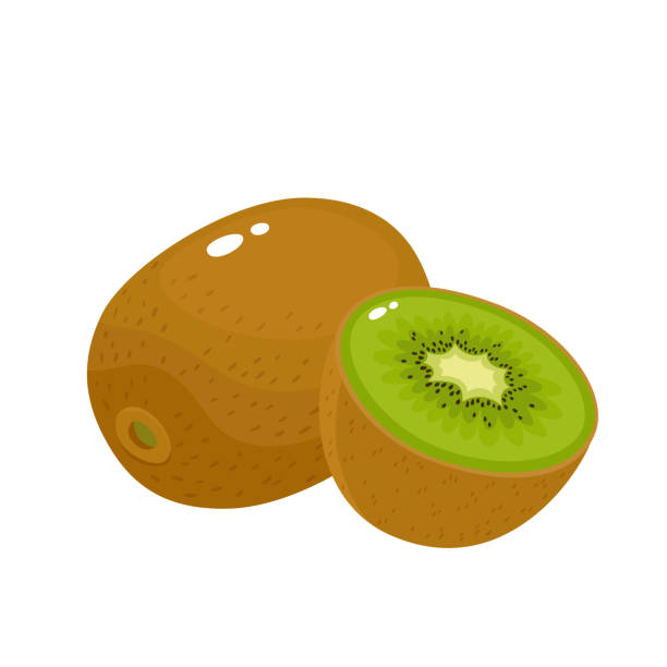 ilustrações de stock, clip art, desenhos animados e ícones de bright vector illustration of colorful fresh kiwi isolated on white - kiwi