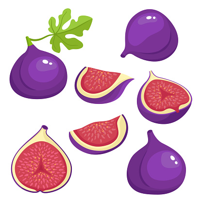 Bright vector set of colorful fresh juicy fig.