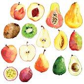 Bright vector watercolor hand drawn fruits: apple, pear, peach,