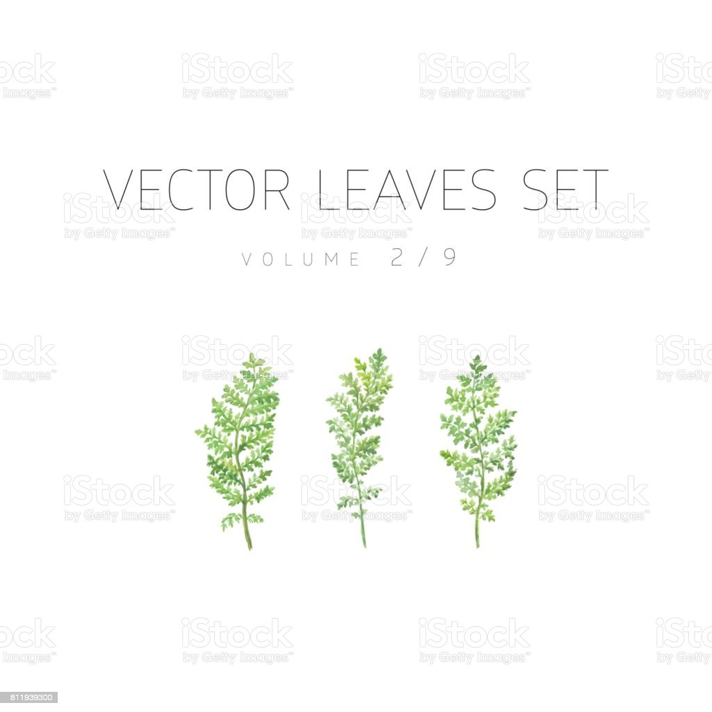 Bright watercolor leaf isolated on white background vector art illustration