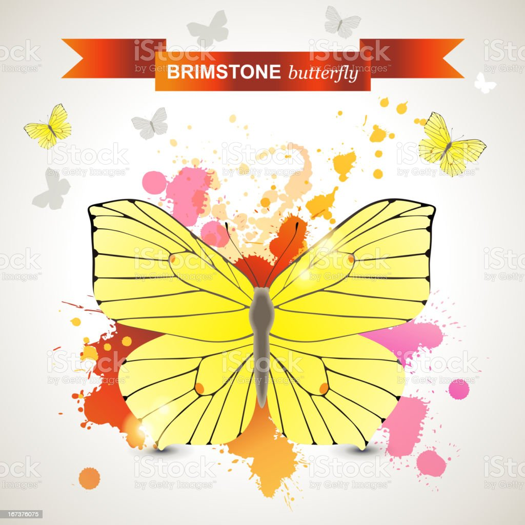 Brimstone butterfly royalty-free brimstone butterfly stock vector art & more images of animal