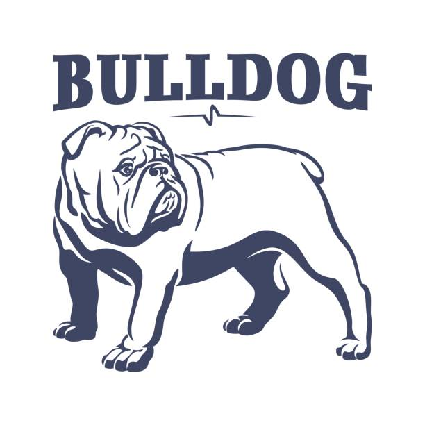 261a71297be British bulldog mascot emblem illustration vector art illustration