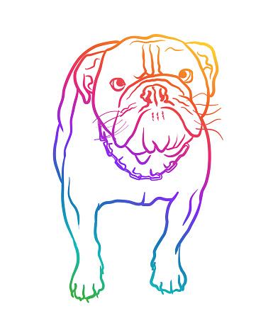 British Bulldog Starring Rainbow