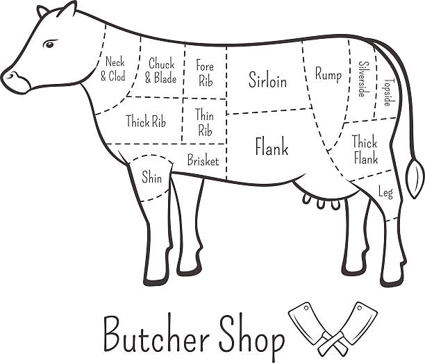 British cuts of beef diagram and butchery design element British cuts of beef diagram and butchery design element. Editable vector template. EPS 10 cooking black and white stock illustrations