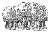 Hand-drawn vector drawing of a Broadleaf Tree Forest. Black-and-White sketch on a transparent background (.eps-file). Included files are EPS (v10) and Hi-Res JPG.