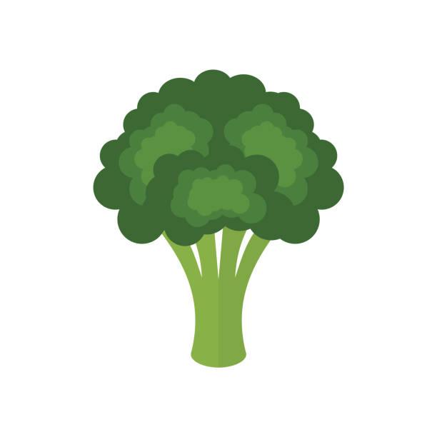 brokkoli frisches grünes gemüse isoliert auf weißem hintergrund. brokkoli-symbol. - kreuzblütengewächse stock-grafiken, -clipart, -cartoons und -symbole