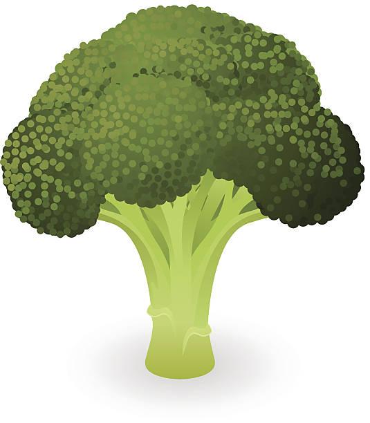 broccoli vector art graphics freevector com https www freevector com vector broccoli