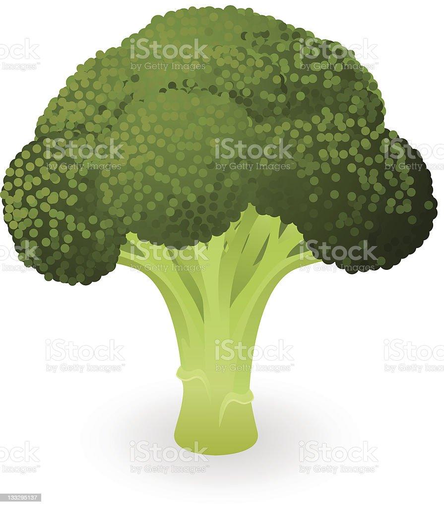 Broccoli illustration vector art illustration