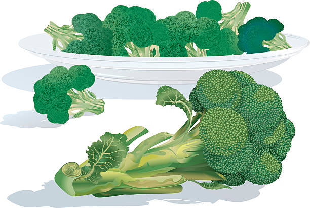 Broccoli Sprouts vector art illustration
