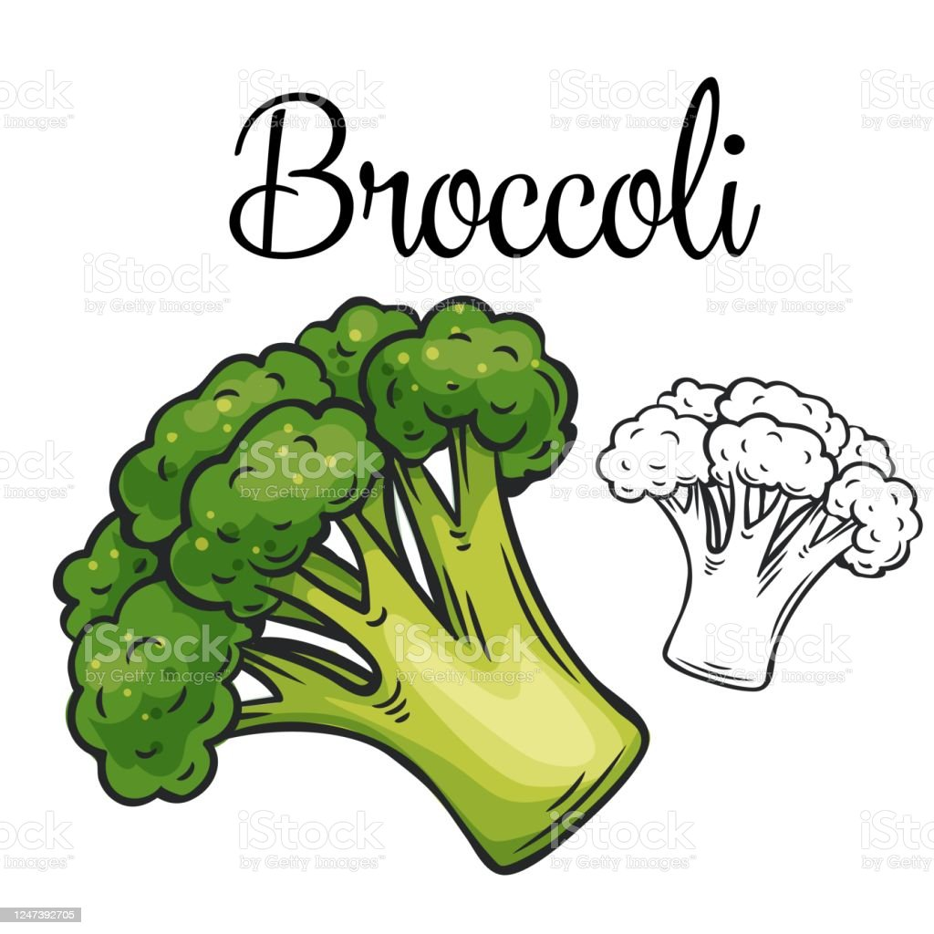 broccoli vector drawing icon stock illustration download image now istock https www istockphoto com vector broccoli vector drawing icon gm1247392705 363324069