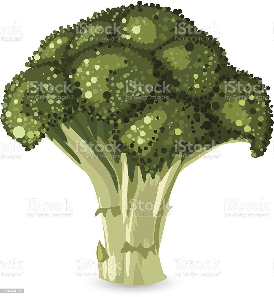 broccoli vector art illustration