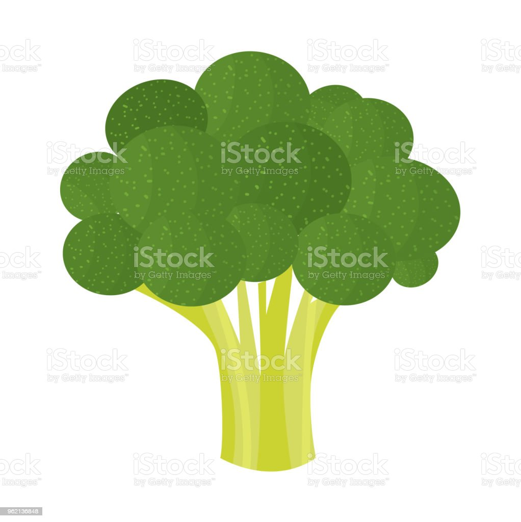 Brocoli - Illustration vectorielle