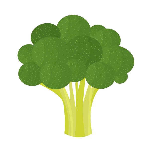 stockillustraties, clipart, cartoons en iconen met broccoli - broccoli