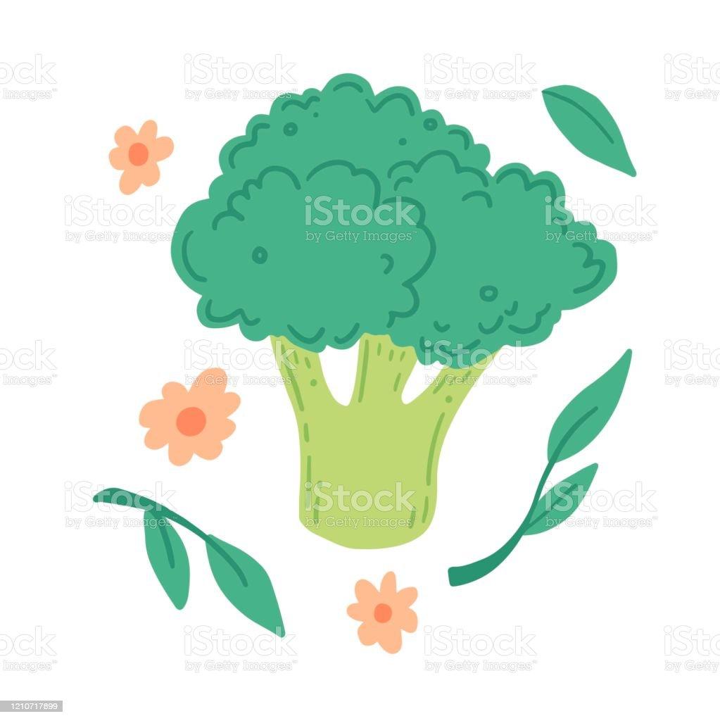 broccoli vector illustration cartoon style stock illustration download image now istock https www istockphoto com vector broccoli vector illustration cartoon style gm1210717899 350847141