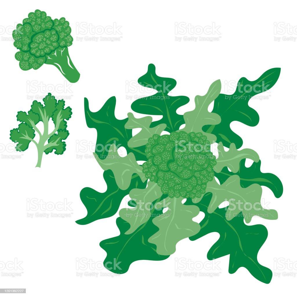 broccoli vector illustration stock illustration download image now istock https www istockphoto com vector broccoli vector illustration gm1201352227 344491291