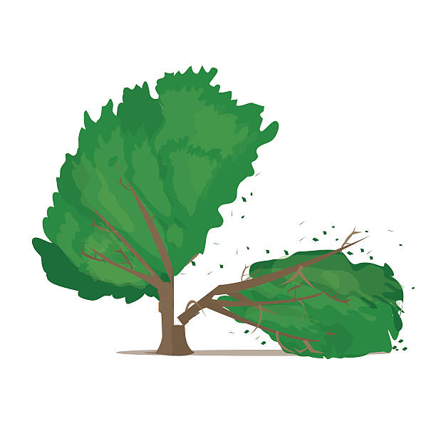 Royalty Free Deforestation Clip Art, Vector Images ...