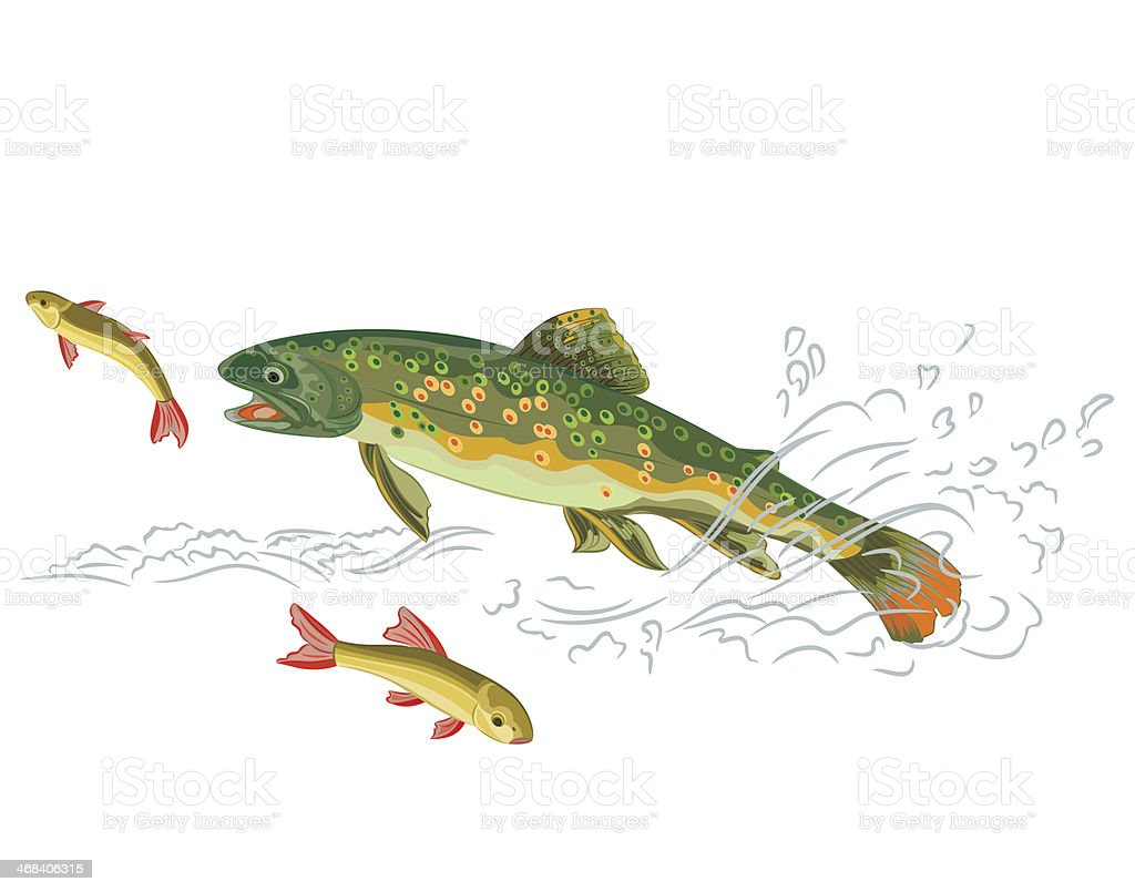 Brook trout  predator catch a fish vector art illustration