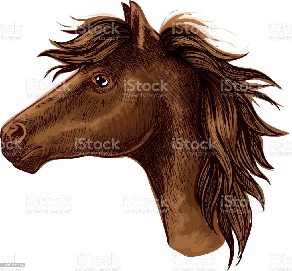 Brown Arabian Horse Animal Head Stock Illustration Download Image Now Istock