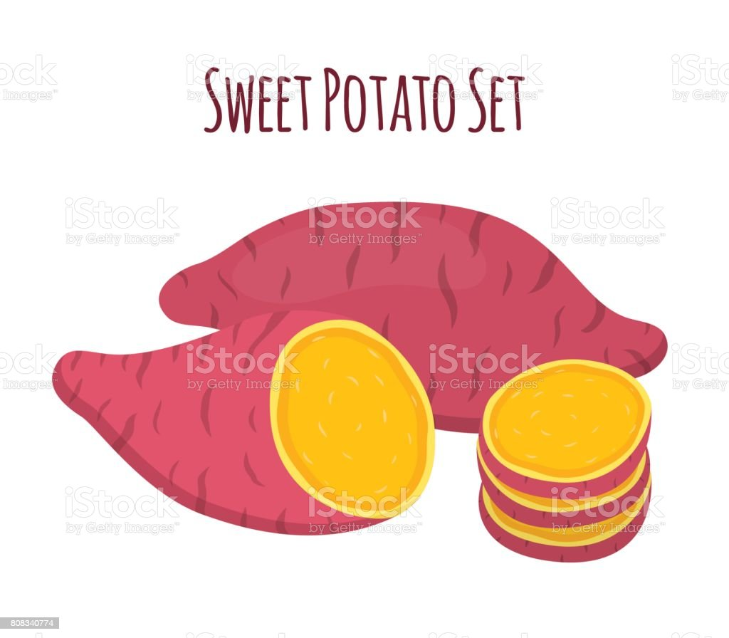 Brown batat, sweet potato and slices. Organic healthy vegetable vector art illustration