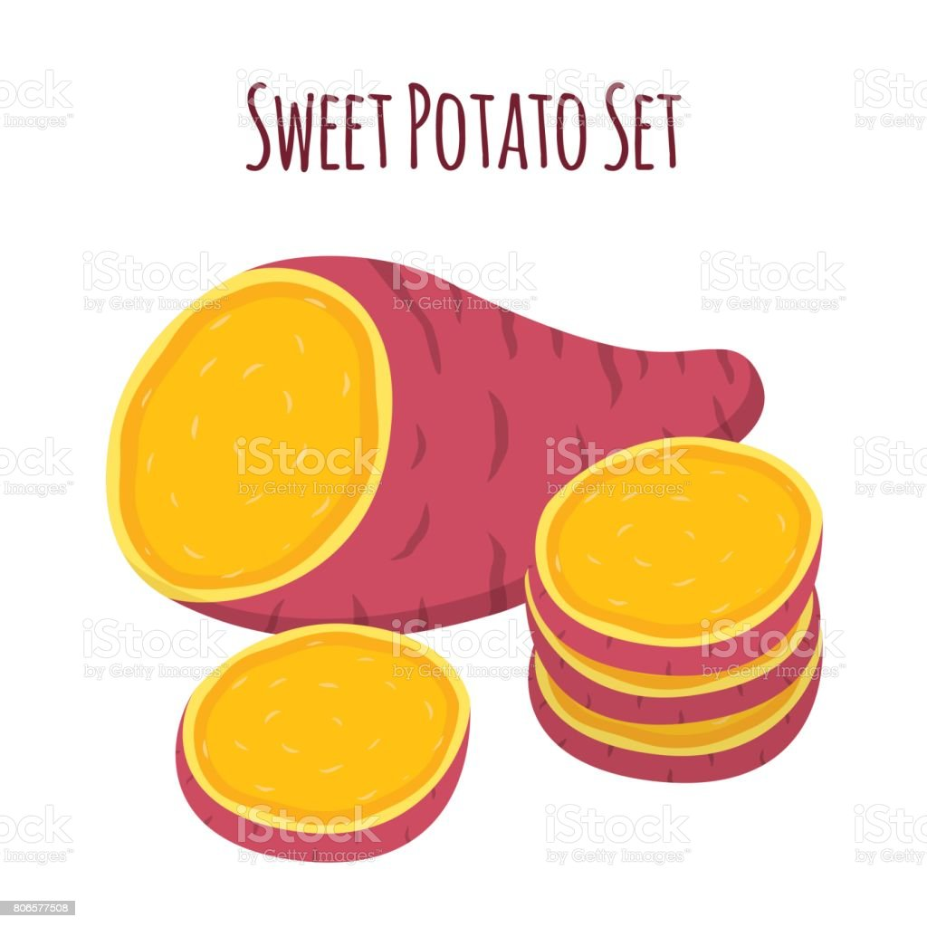 Brown batat, sweet potato. Organic healthy vegetable. Fresh natural root vector art illustration