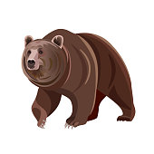Brown bear. Vector illustration isolated on white background