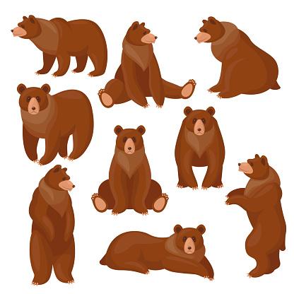 Brown bears set
