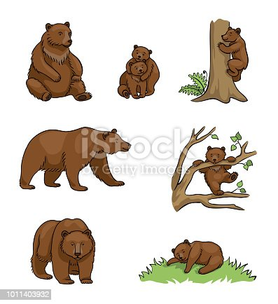 Brown bears - udults and cubs. Vector illustration. EPS8
