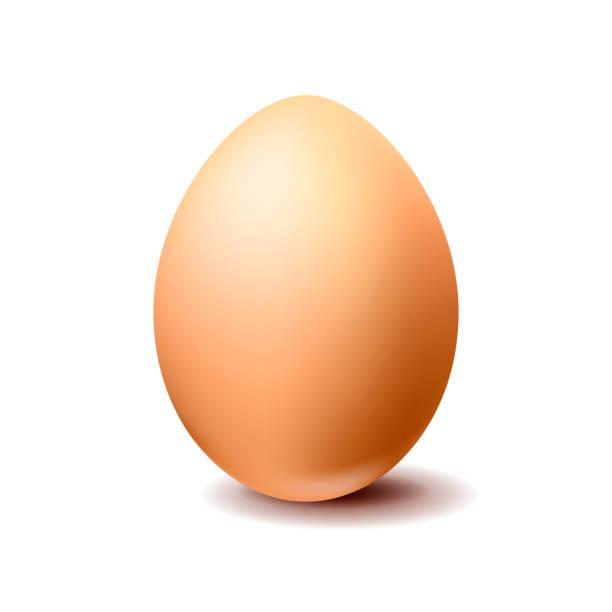 Brown chicken egg on white background Brown realistic vector chicken egg isolated on white background egg stock illustrations
