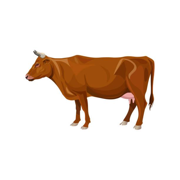 ilustrações de stock, clip art, desenhos animados e ícones de brown cow standing - beef angus
