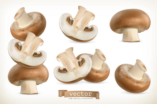 ilustrações de stock, clip art, desenhos animados e ícones de brown cremini mushroom, 3d vector icon set isolated on white - cogumelos