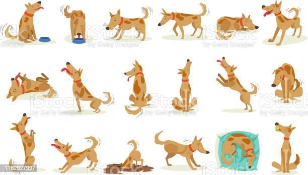 Brown dog set of normal everyday activities vector id1162927997?b=1&k=6&m=1162927997&s=612x612&h=spdqglkj2ep8b vkgthg92z7taxfnu cw2omdvtsdzw=