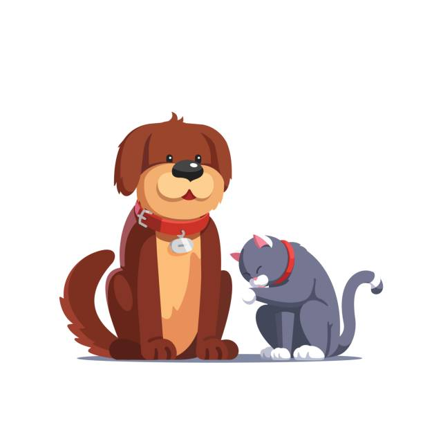 Brown dog sitting near the grey cat washing itself Brown fluffy dog pet with red collar sitting near the grey cat washing itself licking its paw. Domestic animals together. Flat style vector illustration isolated on white background. collar stock illustrations