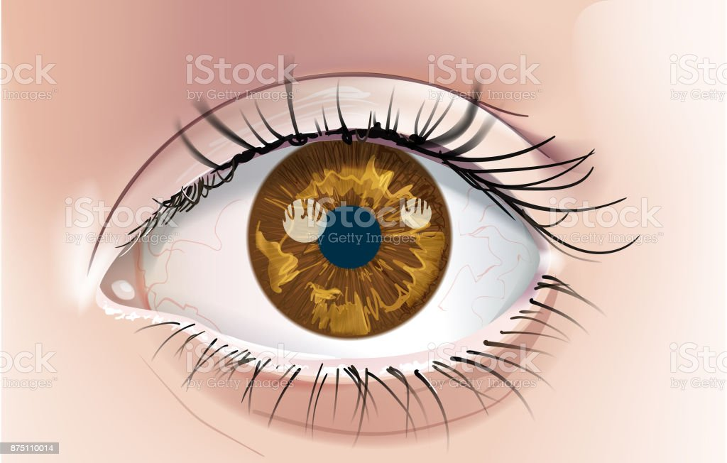 Brown Eye vector art illustration