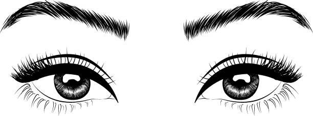 棕色眼睛和外形完美的眉毛和充分的睫毛 - 睫毛 幅插畫檔、美工圖案、卡通及圖標