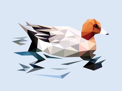 Brown head duck swim on the river
