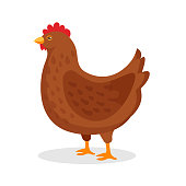Brown hen domestic bird with red comb isolated on white. Egg-production chicken walking. Poultry, broiler, farm animal. Flat cartoon country fowl cockerel rural character. Vector illustration