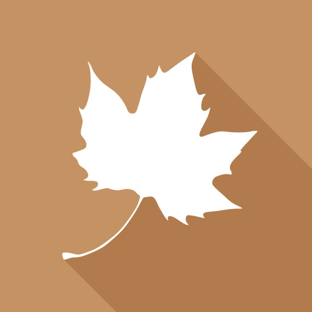 Brown Maple Leaf Icon Vector illustration of a white maple leaf on a brown background. maple leaf stock illustrations