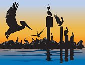 Brown Pelicans at Sunset