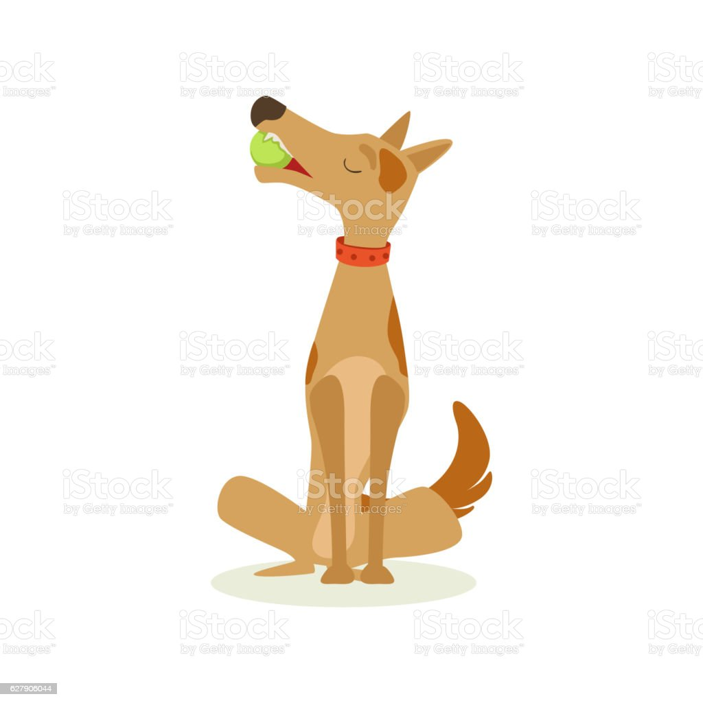 Brown Pet Dog Sitting With Gulf Ball In Mouth, Animal vector art illustration