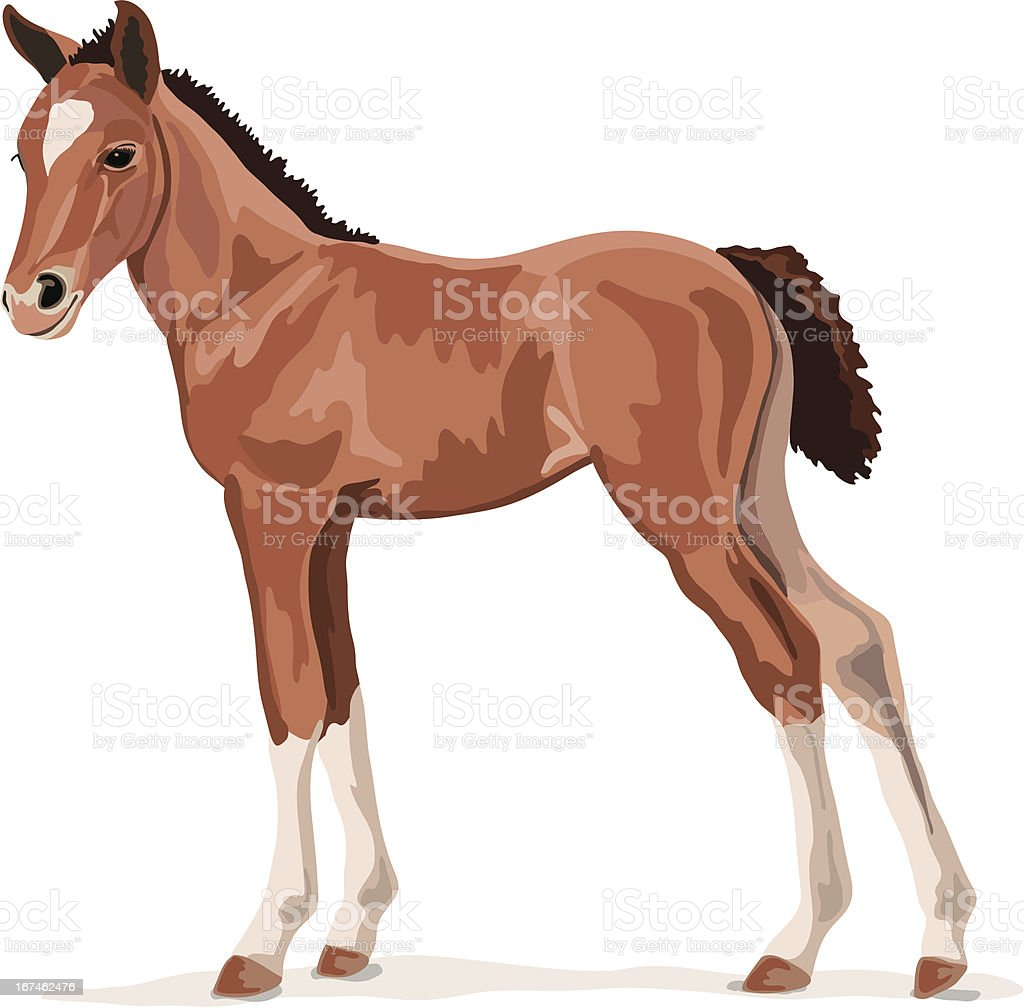 brown pony foal royalty-free stock vector art