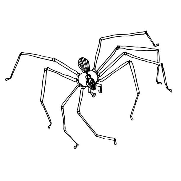 illustrazioni stock, clip art, cartoni animati e icone di tendenza di brown recluse spider doodle - ragno violino
