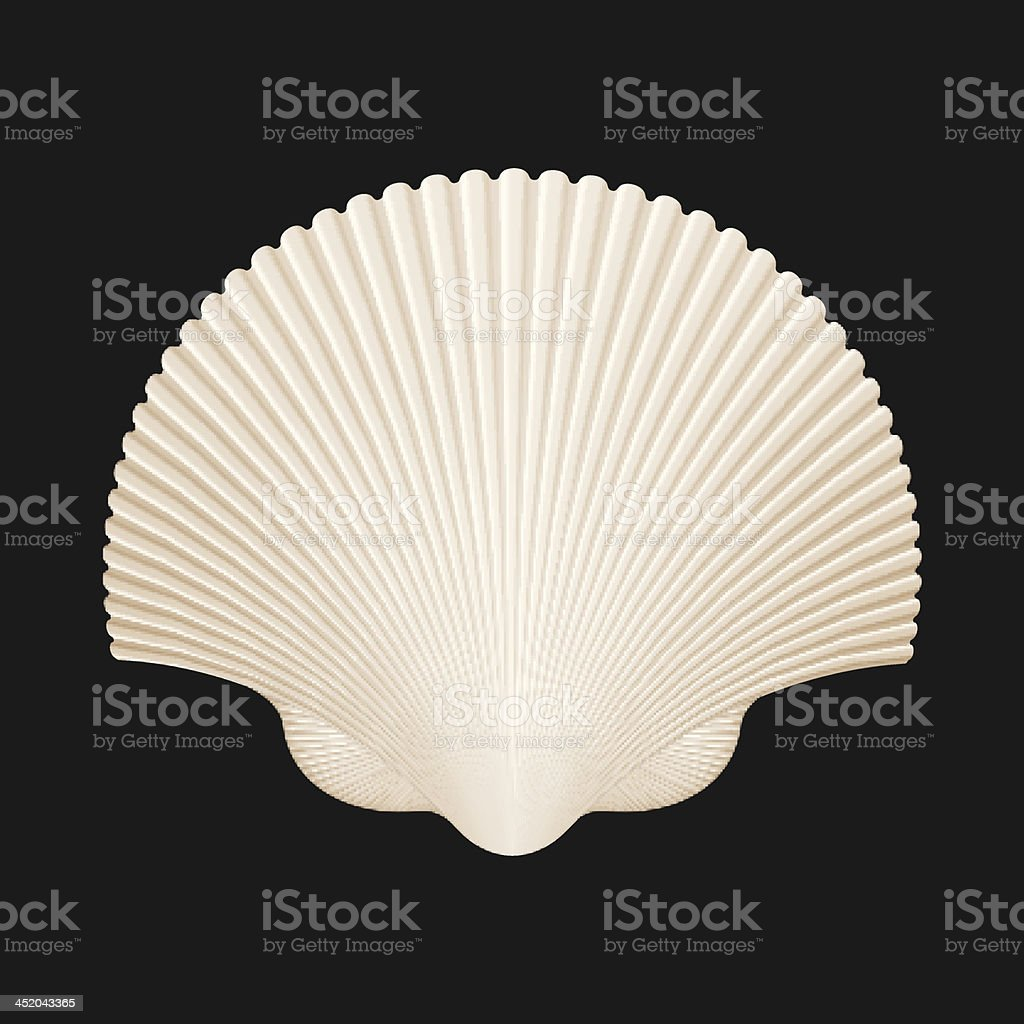 Brown Scallop Shell. Isolated On Black. Vector Illustration royalty-free brown scallop shell isolated on black vector illustration stock vector art & more images of animal shell