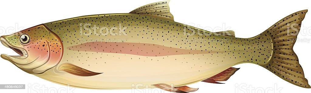Brown trout royalty-free brown trout stock vector art & more images of animal