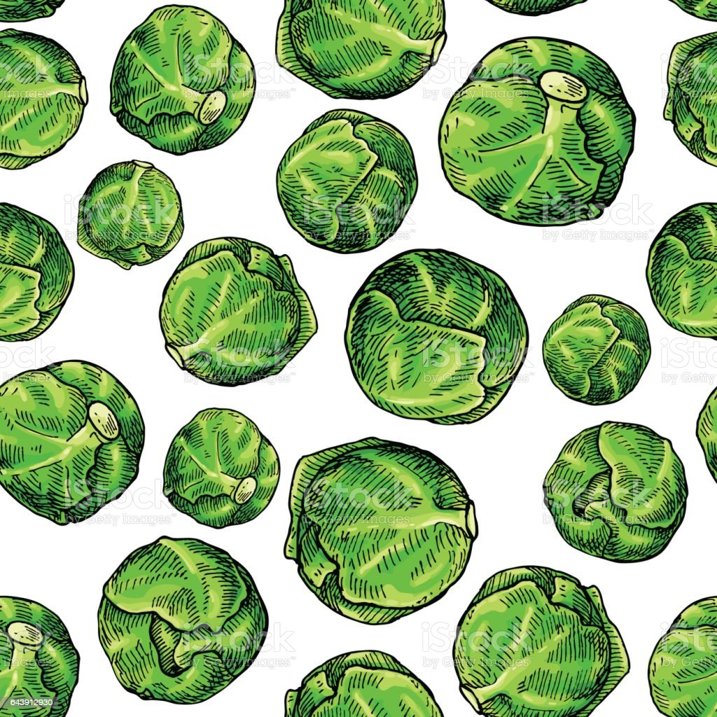 Brussel sprout hand drawn vector seamless pattern. Vegetable artistic vector art illustration
