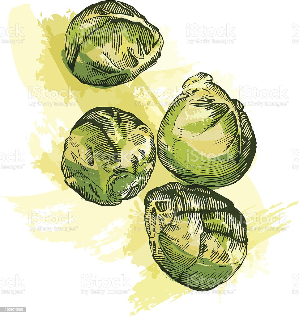 Brussel Sprouts vector art illustration