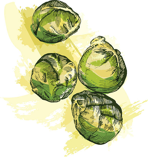 stockillustraties, clipart, cartoons en iconen met brussel sprouts - spruitjes