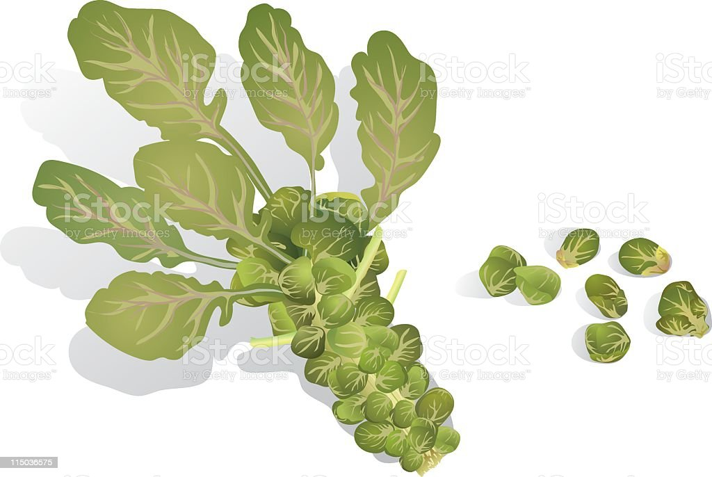 Brussels Sprout royalty-free stock vector art