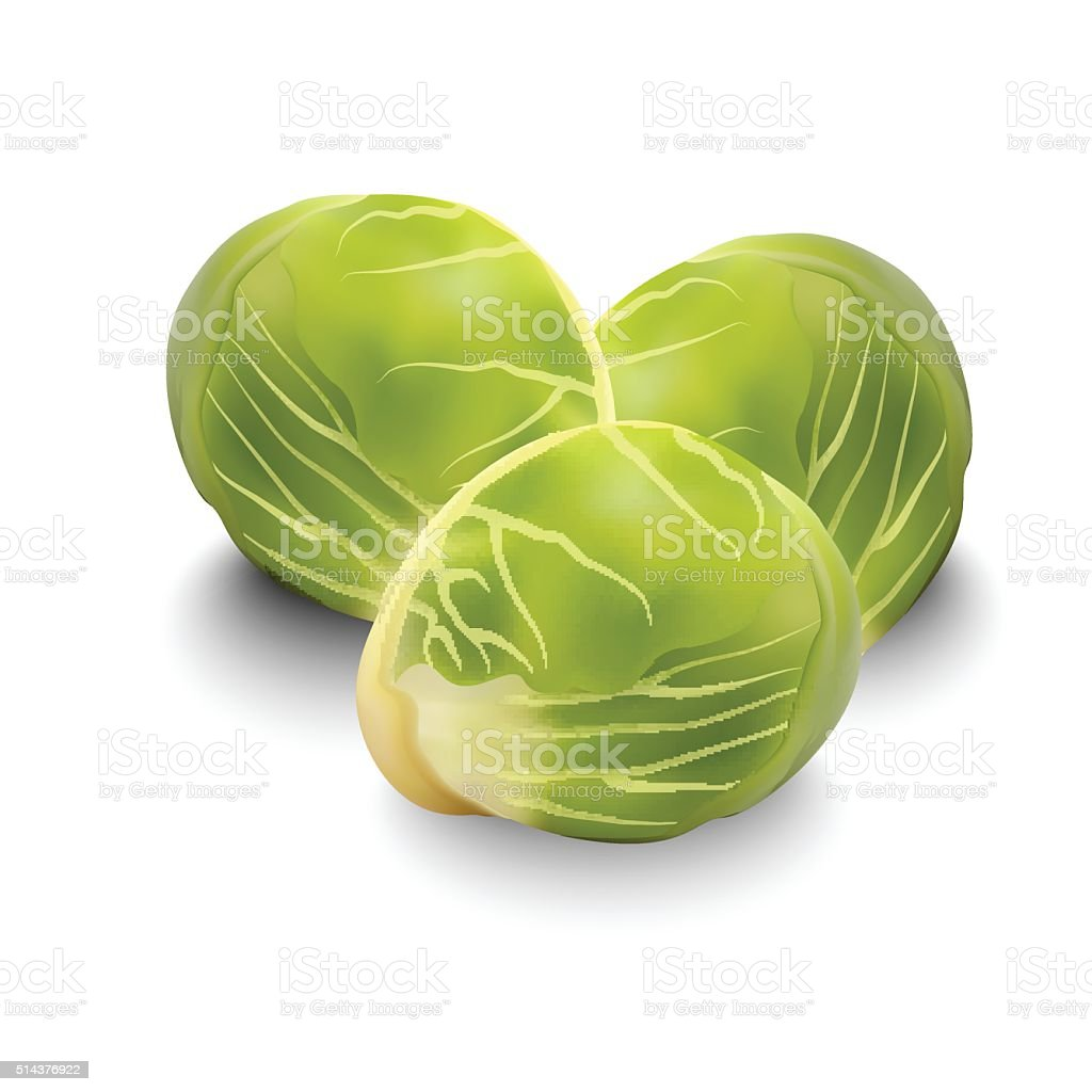 Brussels sprouts for your design vector art illustration